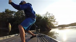 Another solid bass in the boat for Elite Angler Chad Pipkens on day 3 of the August 2014 Bassmaster Delaware River tournament